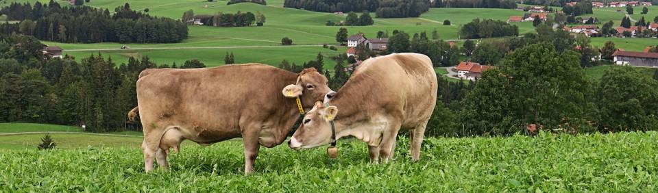 Biohof Lautemann – Organisch-biologische Landwirtschaft